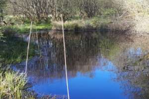 Pond with bottle traps