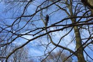 Roost inspections in trees