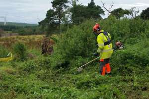 Vegetation clearance
