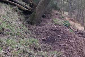 Main badger sett