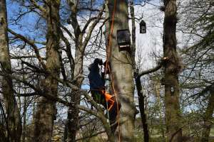 Bat box inspections