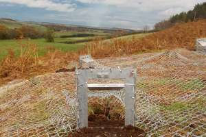 Badger sett exclusion